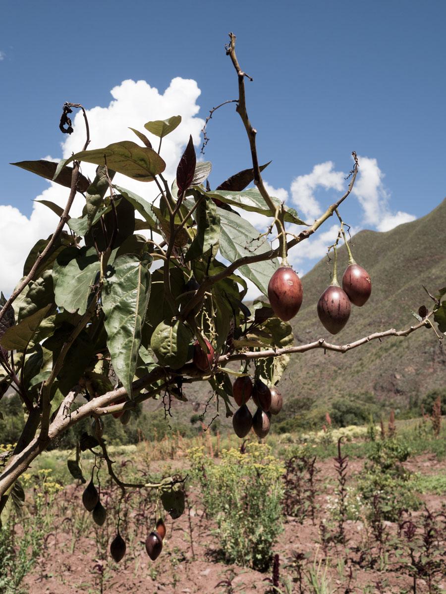 Peru-Inkaterra-Urumbamba-gardens-4