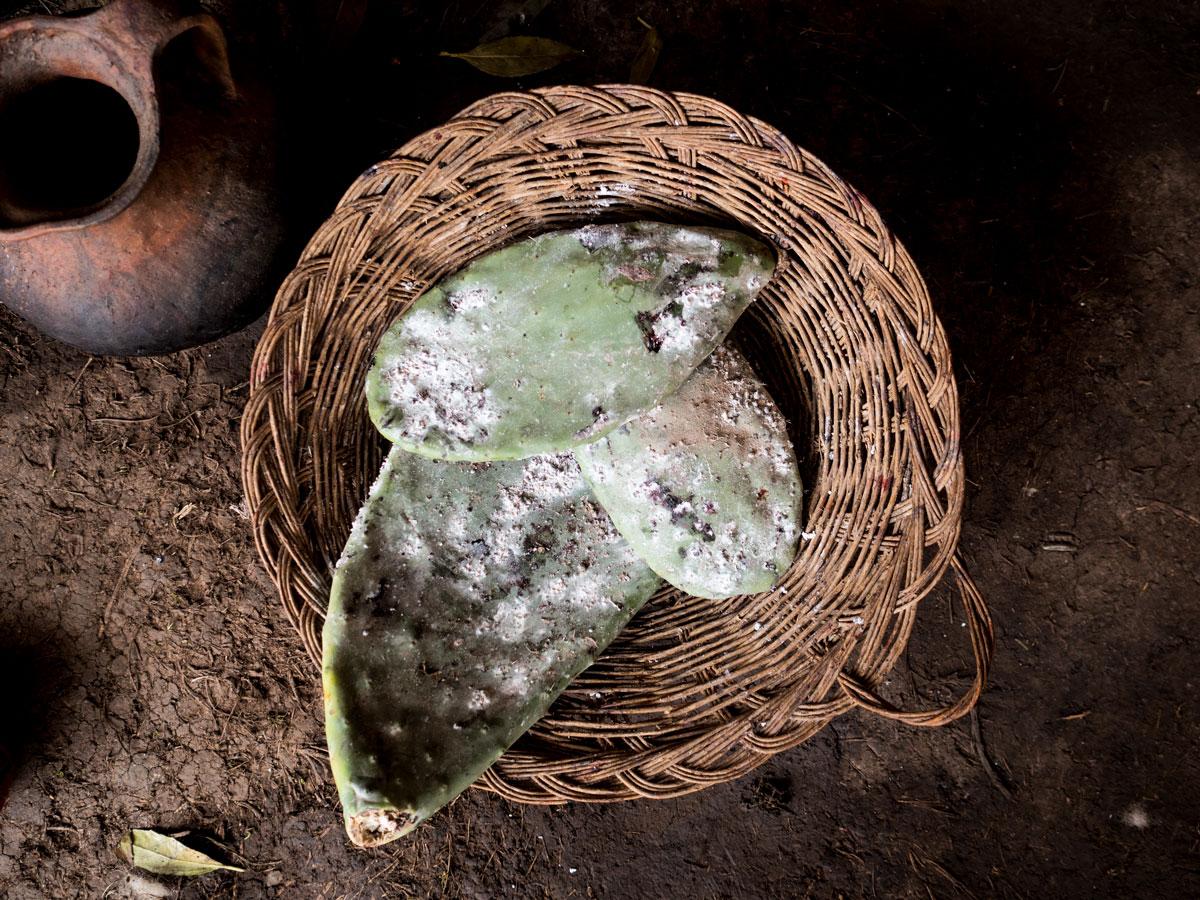 Peru-andean-cactu-bugs-natural-dye