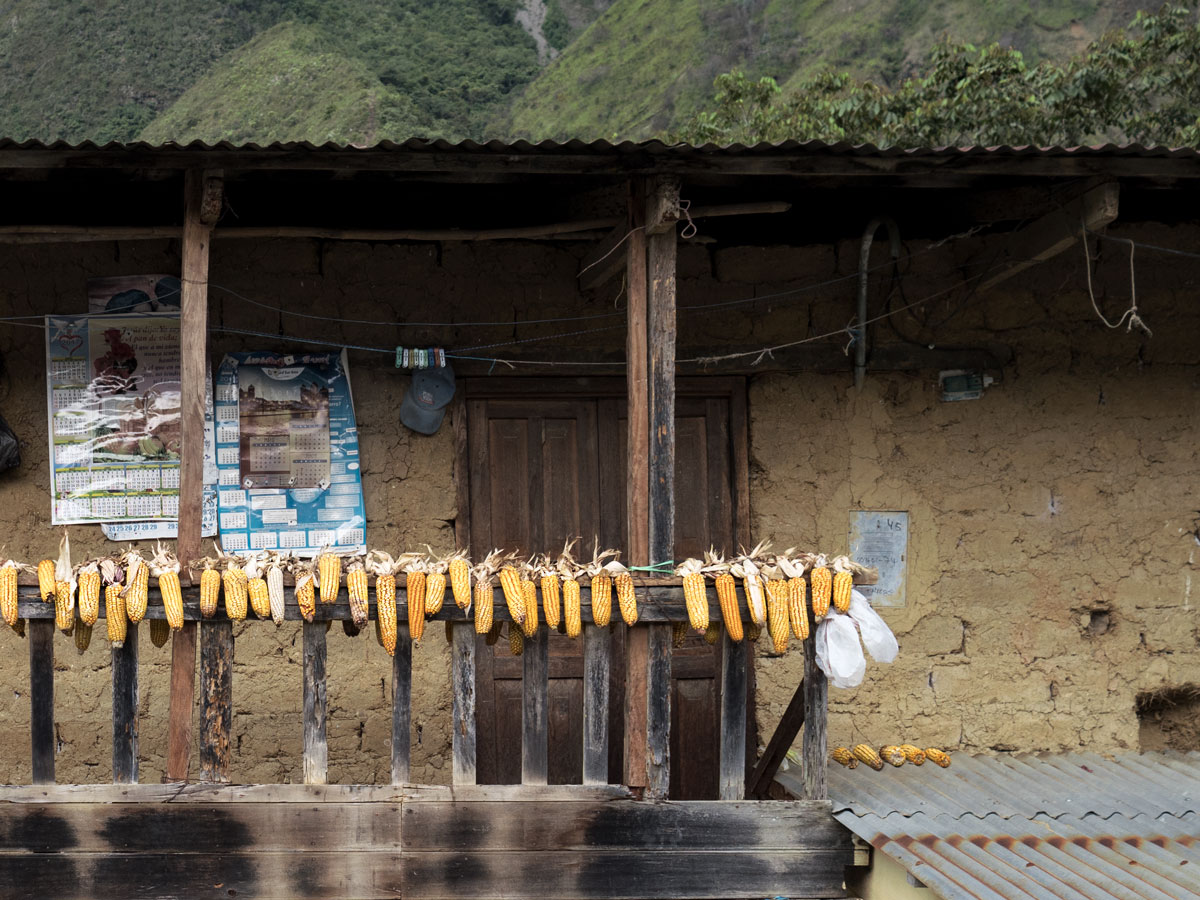 Peru-corn-out-to-dry