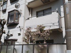 charlie-may-japan-tokyo-aoyama-26