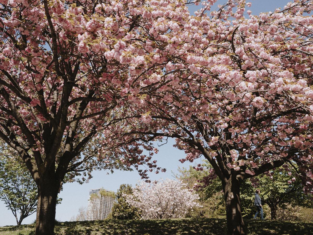 charlie-may-japan-tokyo-aoyama-blossom-1