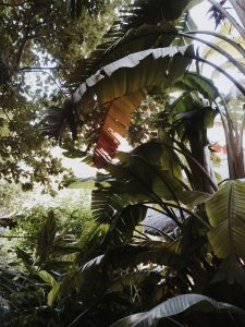 Asia_Gardens_Thai_Spa_2