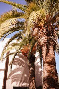 fairmont_royal_palm_marrakech_10